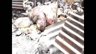 пожар на зеленом  базаре