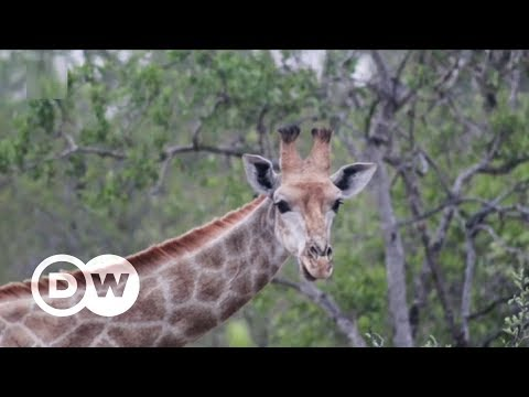 Using photography as a conservation tool | DW English