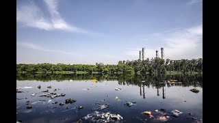Science News - Microbe found in New Jersey wetlands can break down PFAS contaminants