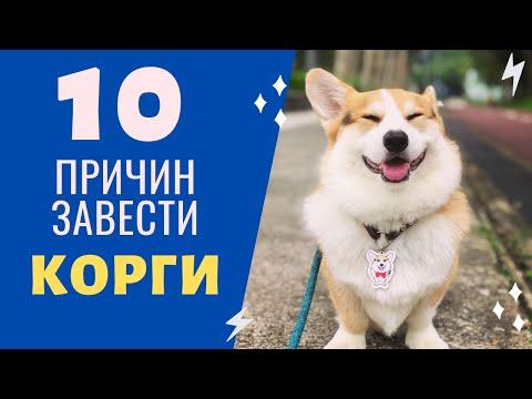 Вопрос: Почему порода собак Велш Корги такая дорогая?