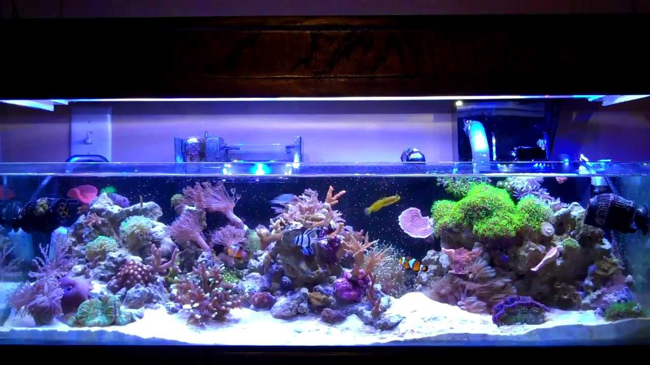Feeding my reef tank 20 gallon long tank youtube for Saltwater fish for 10 gallon tank