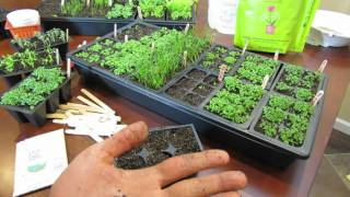 MFG 2016: Planting Chives a Perennial Herb Using the Over-Seeding Method: Start Early!