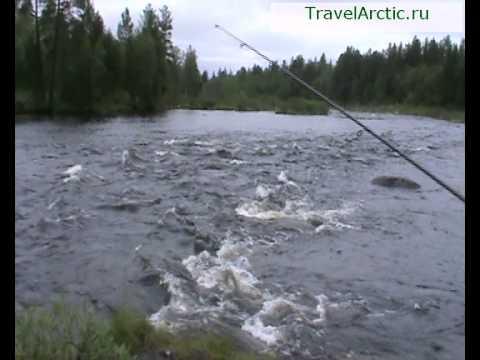 рыбалка на реке кица мурманская область