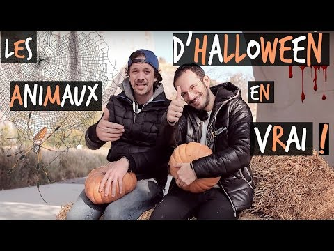 LES ANIMAUX DHALLOWEEN FEAT CYRUS NORTH -TOOPET