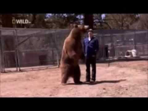 911 Call Bear Kills A Man Warning Graphic Content Youtube