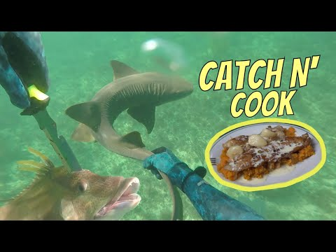 GRABBING A SHARK! And The BEST EVER How To Cook HOGFISH Recipe {Catch N Cook}