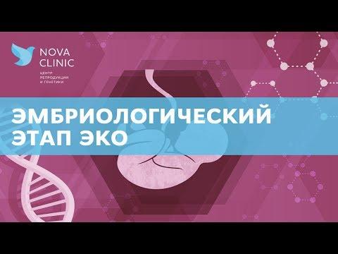 Как проходит эмбриологический этап ЭКО?