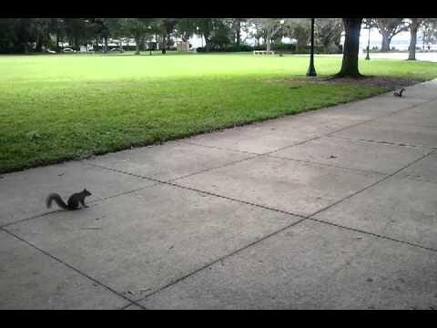 video - 2012-10-02-11-53-52.mp4