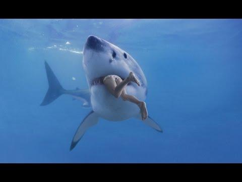 Die BRUTALSTEN Haie der Welt  - DOKUMENTATION 2016 HD *NEU*