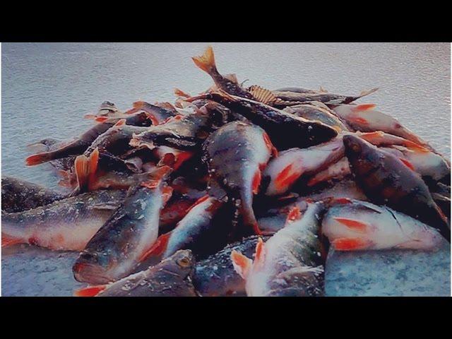рыбалка на. окуня в феврале