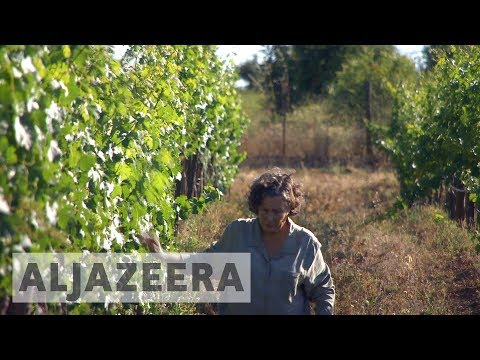 wine article Mexicos wine industry fears climate change