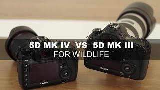 Canon EOS 5D Mark IV vs 5D Mark III  - For Wildlife