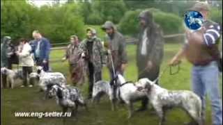 Межрегиональная 115-я Московская выставка собак охотничьих пород младший ринг кобелей