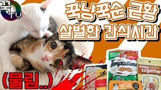 고양이친구들 꾹냥,꾹순 살벌한간식시간...(물려서피남..) [ 꾹TV ]