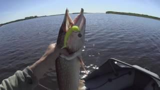 Ни хвоста, ни чешуи. Рыбалка в Белом море