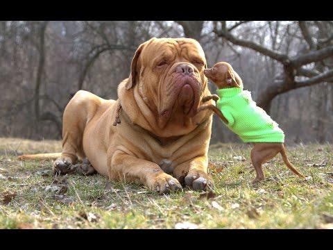 Los perros más bonitos del mundo, Intenta no morir de amor con este video