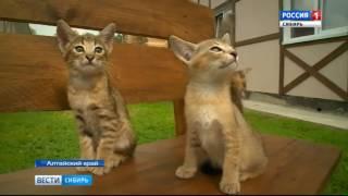 Котенка за миллион рублей продали в Барнауле