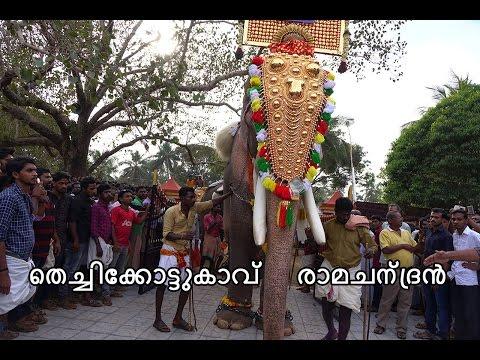 Thechikottukavu Ramachandran 2016 പന്തല്ലൂർ പൂരം