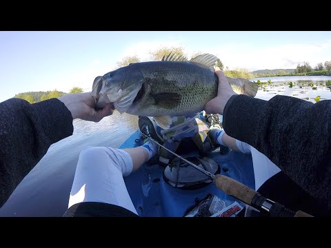 Catching BIG BASS At Cheadle Lake In Oregon