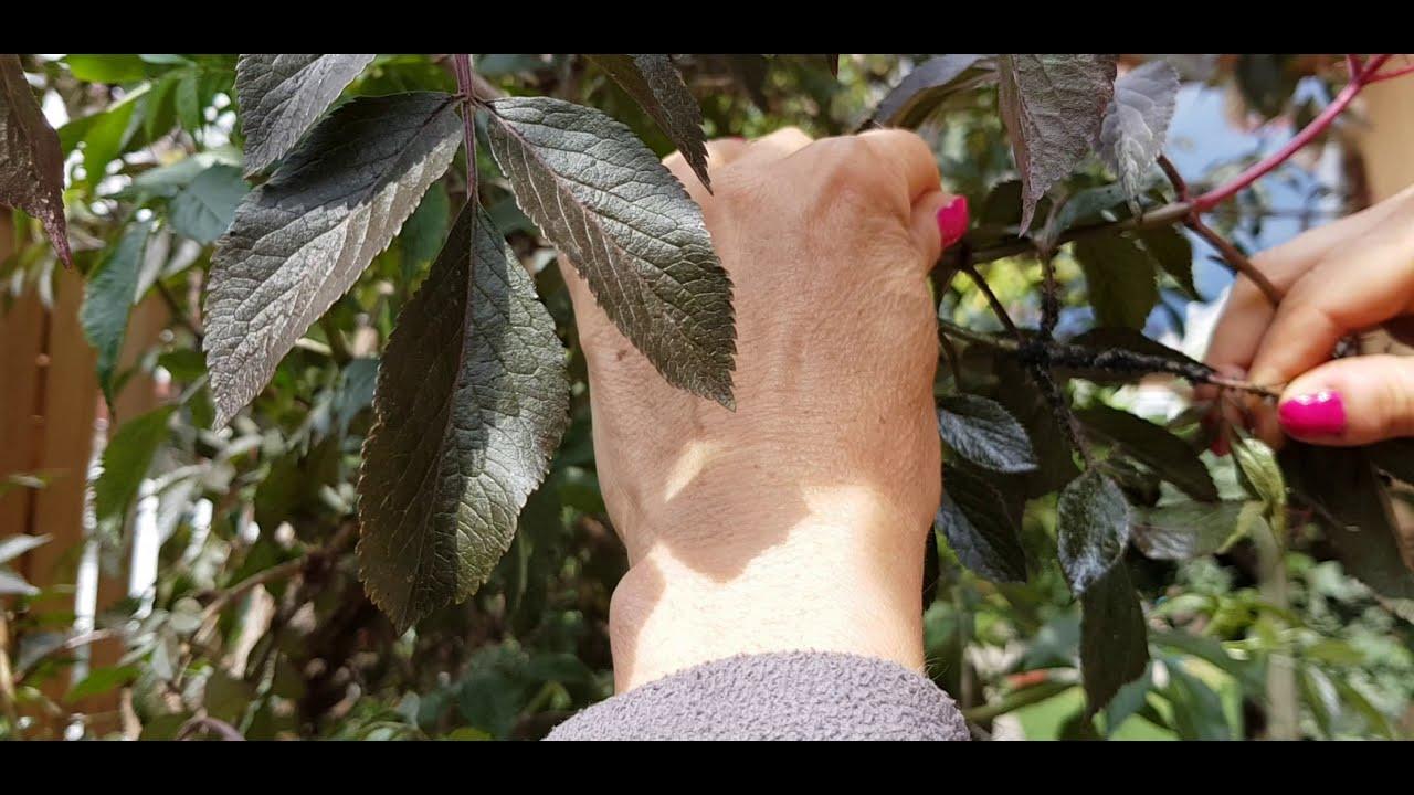 őshonos gyógyszer a férgek ellen