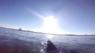 Xuất hiện robot do thám hình cá mập do Hải quân Mỹ chế tạo