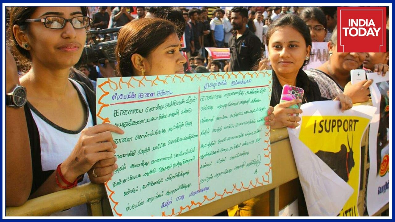 Pro Jallikattu Protests : Tamil Uprising For Tradition & Culture Stuns India