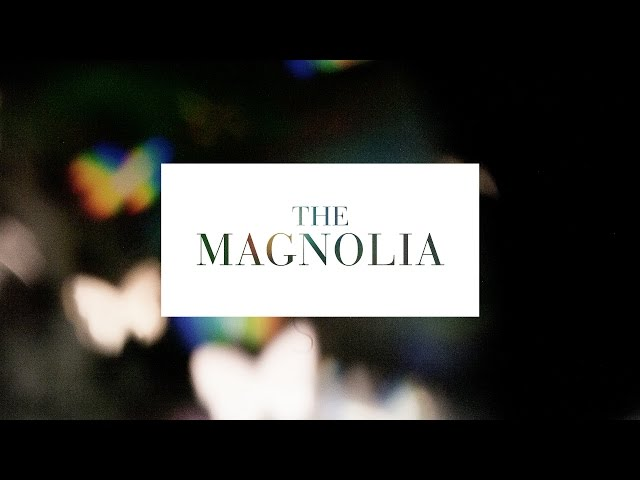 The Magnolia - Yesterday