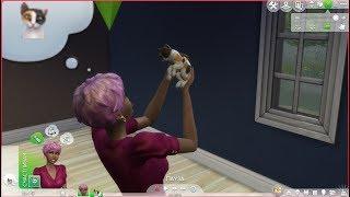 The sims 4 Кошки и собаки №1 Бандит