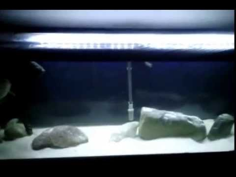my 125 gal fish tank with new led lights & my 125 gal fish tank with new led lights - YouTube azcodes.com