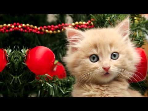 Titty Cat - Jingle Bells  :: Animal Singer Funny Videos :: Children Christmas song ::