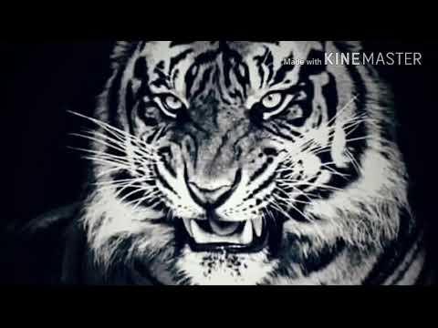 siluman harimau