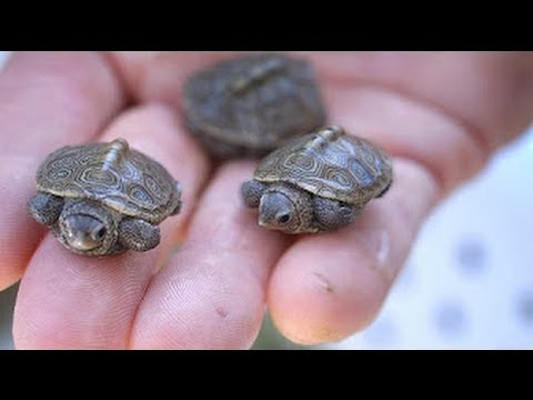 12 Most UNUSUAL Turtles