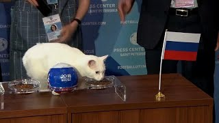 القط أخيل يتنبأ بنتيجة المبارة الافتتاحية بين السعودية وروسيا …
