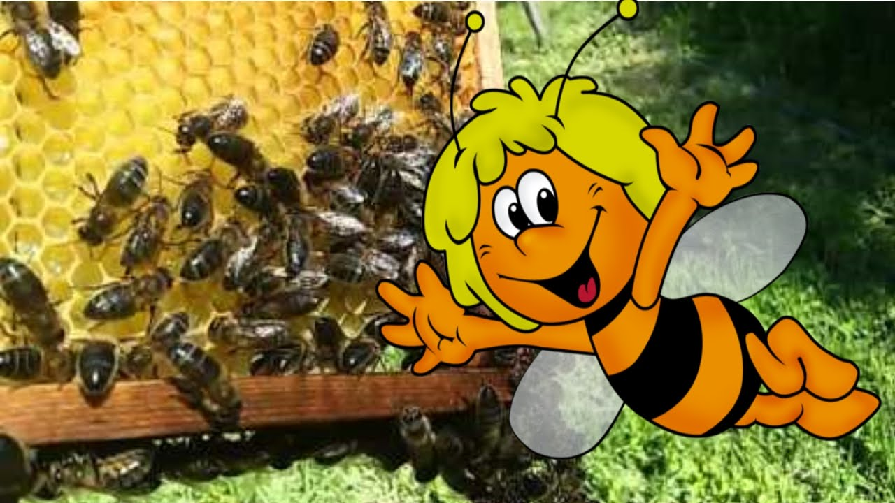 ПЧЕЛОСЕМЬЯ / МАТКА! / The queen bee colonies!