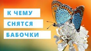 К чему снятся бабочки женщине или мужчине