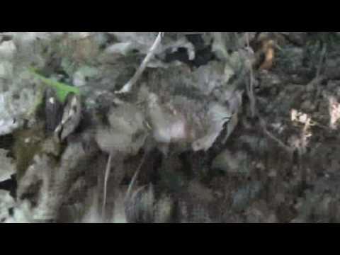 American Upper Paleolithic Part 4 Artifact Hunt