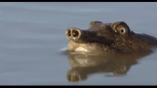 Уникальнейший животный мир Дальневосточной тайги, Уссурийский край.