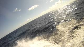 Dolphins in Puerto Rico
