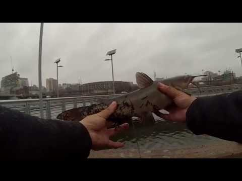 Catfishing The Schuylkill River With Nightcrawlers (Philadelphia, PA)