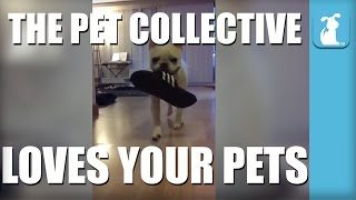 The Pet Collective Loves Your Pets