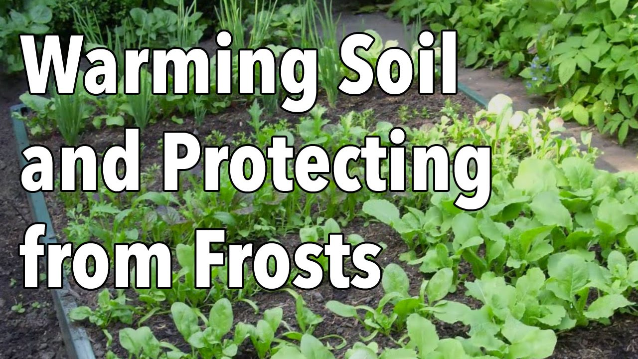 how to warm soil and protect seedlings from frost