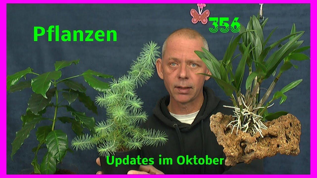Pflanzen Im Haus Ganz Einfach Einige Updates In Zusammenfassung