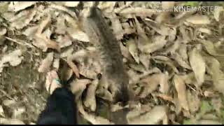 Download Video Kucing petani lagi berada dikebun jagung MP3 3GP MP4