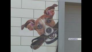 Первый частный приют для бродячих собак откроется в Красноярске уже в октябре