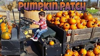 Pumpkin Hunting  A visit to the PUMPKIN Patch SquashTractor Halloween White Pumpkin