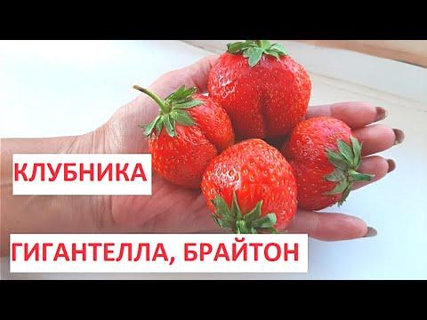 КЛУБНИКА | Лучшие сорта клубники | Ремонтантная клубника выращивание | Моя дача в Хабаровске