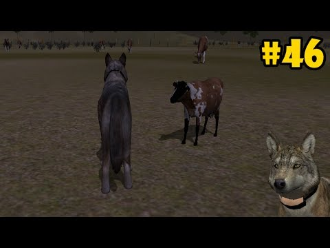 Wolf Quest 2.7.3 -The Cattle Ranch- Android/iOS/Kindle - Gameplay Episode 46