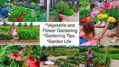 'Vegetable & Flower Gardening | Garden Life | Garden Tips', Just Life in the Garden 3-23
