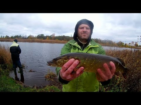 Осенняя щучка. Рыбалка в Сестрорецке, Финский залив.
