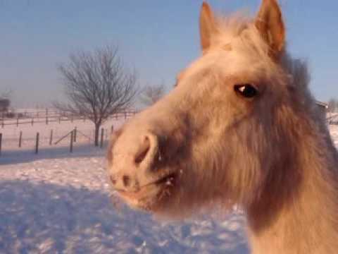 image cheval fou